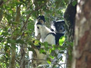 De Indri
